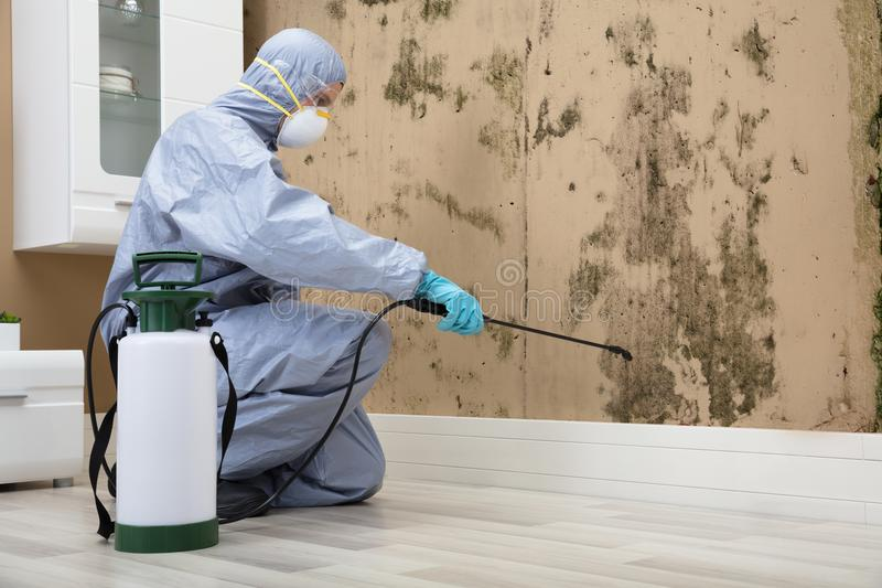 What to look for in a pest control company in Rockingham | Cleaning Keeper